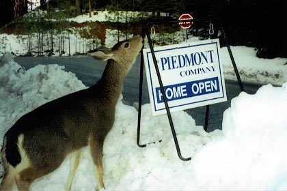 Deer smelling sign